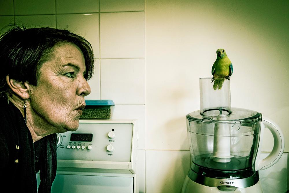 Parakeet on the loose