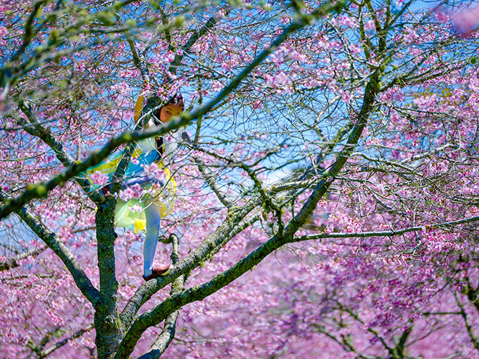 Best of Auckland this week: Cherry blossom festival, Wixii's Big Vintage Sale, and more events