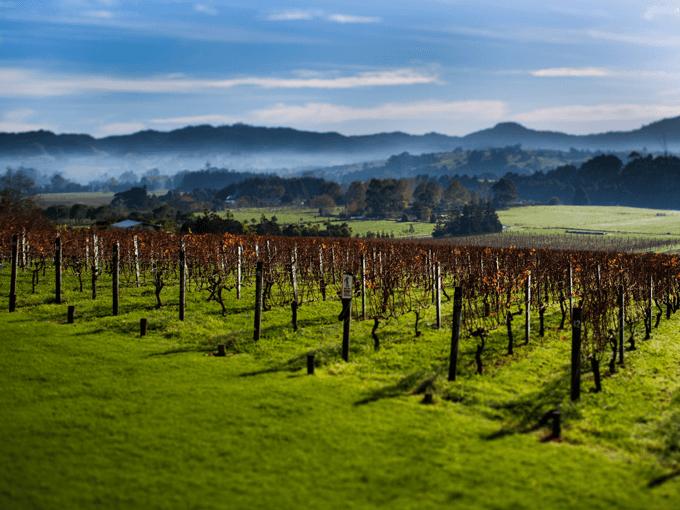 Sip your way around Auckland's vineyards